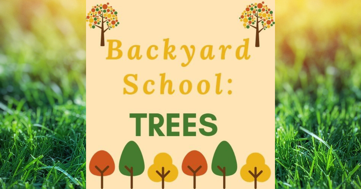 Backyard School : Trees Carousel Image - Click for more information.