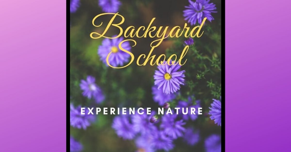 Backyard School Experience Nature Image