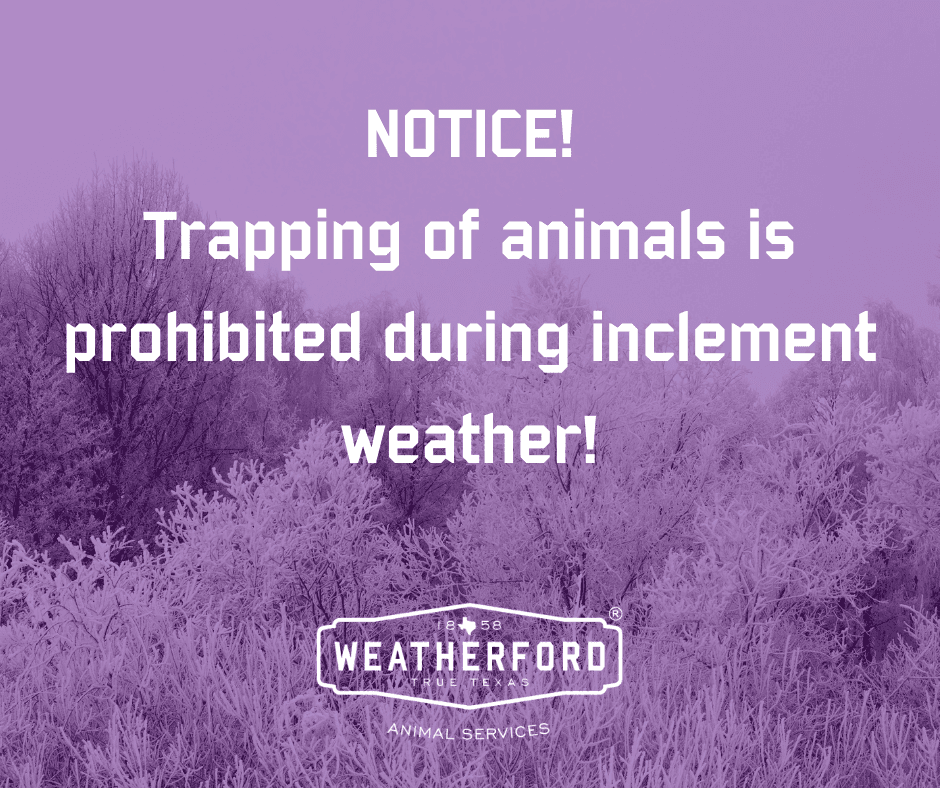 Trapping of Animals Prohibited during inclement weather